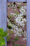Planta e Gray Wooden Fence de floresc?ncia Natureza, conceito de jardinagem Fundo da natureza imagem de stock