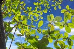 Planta e hastes da folha com o alargamento no fundo do céu azul Imagens de Stock Royalty Free