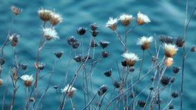 Planta e mar azul video estoque