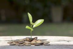 Planta e moedas Foto de Stock Royalty Free