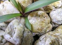 Planta e pedra Fotografia de Stock