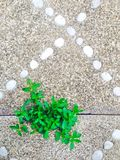 Planta e pedra Fotografia de Stock Royalty Free