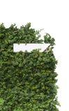 Planta e postbox do montanhista Imagens de Stock