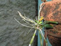 Planta e raiz Fotografia de Stock Royalty Free