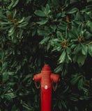 Planta e tubulação vermelha fotos de stock royalty free