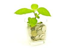 Planta e um copo de moedas tailandesas Imagem de Stock Royalty Free