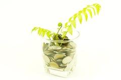 Planta e um copo de moedas tailandesas Fotografia de Stock Royalty Free