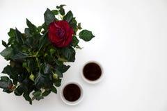 Planta e xícaras de café de Rosa fotografia de stock royalty free