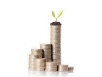 Planta em moedas e em gráfico de ouro Imagens de Stock