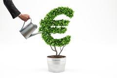 Planta em pasta com forma de EUR rendição 3d Foto de Stock