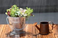 Planta em pasta com uma lata molhando fotos de stock
