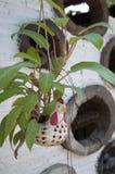 Planta em pasta da galinha Imagem de Stock Royalty Free