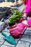 Planta em pasta decorativa home Imagens de Stock Royalty Free
