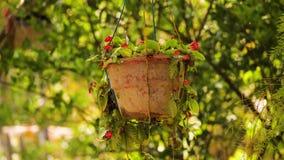 Planta em pasta tropical vídeos de arquivo