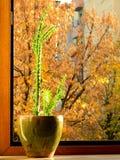 Planta em pasta verde na soleira contra um fundo das folhas de outono fora fotos de stock royalty free