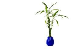 Planta em um potenciômetro Imagem de Stock Royalty Free
