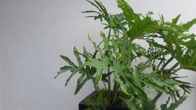 Planta em um potenciômetro Foto de Stock