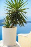 Planta em um vaso de flores contra o mar em Santorini foto de stock royalty free