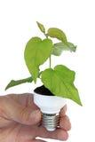 Planta em uma base do bulbo da economia de energia foto de stock royalty free