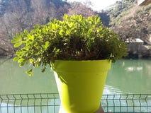 Planta em uma parte inferior do rio imagens de stock