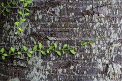 Planta en árbol de coco Fotos de archivo