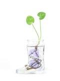 Planta en agua Imágenes de archivo libres de regalías