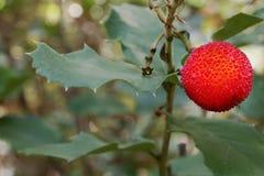 Planta en bosque Imagen de archivo libre de regalías