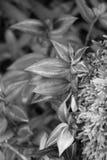 Planta en bosque Foto de archivo libre de regalías