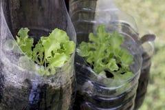 Planta en botella plástica Fotos de archivo libres de regalías