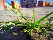 Planta en ciudad Fotos de archivo