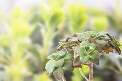 Planta en conserva de la planta de la casa en blanco fotos de archivo