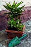 Planta en conserva decorativa casera Fotos de archivo