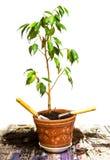 Planta en crisol Fotografía de archivo