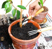 Planta en crisol Foto de archivo