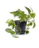 Planta en crisol Foto de archivo libre de regalías