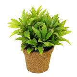Planta en crisol Imagen de archivo