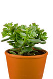 Planta en crisol anaranjado Imagen de archivo