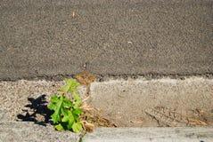 Planta en el canal Imagen de archivo libre de regalías