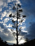 Planta en el cielo Imagen de archivo libre de regalías