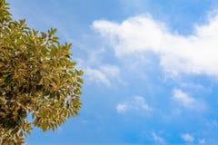Planta en el cielo azul Fotos de archivo libres de regalías