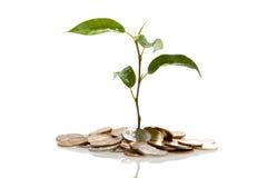 Planta en el crecimiento de las monedas Foto de archivo