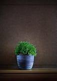 Planta en el crisol Imagenes de archivo