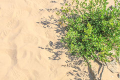 Planta en el desierto Imágenes de archivo libres de regalías