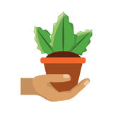 Planta en el ejemplo del vector del pote Fotografía de archivo libre de regalías