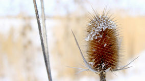 Planta en el invierno Imagen de archivo libre de regalías