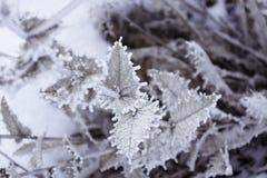 Planta en el invierno Para el fondo fotos de archivo