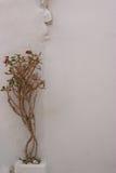 Planta en el walll Fotos de archivo libres de regalías