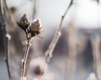 Planta en escarcha Imagen de archivo
