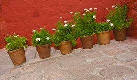 Planta en florero imagenes de archivo