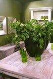 Planta en interior verde fotografía de archivo
